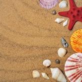 Obrázek starfishes-1351559-1920.jpg